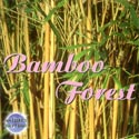Nature's Rhythms: Bamboo Forest CD